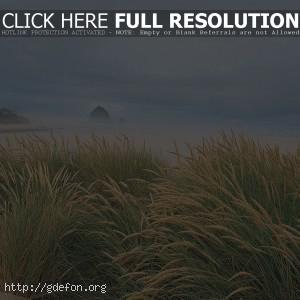 трава, пляж, море, песок