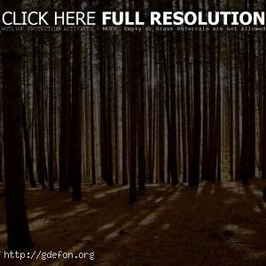 Деревья, лес, свет