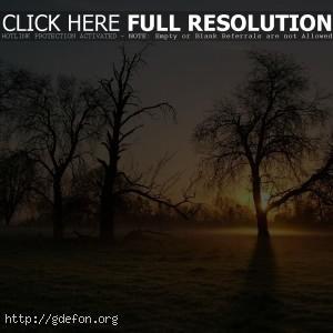Дерево, туман, утро