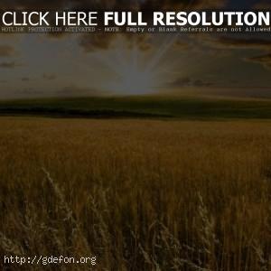 Пейзажи, природа, поле, солнце, холмы, долина