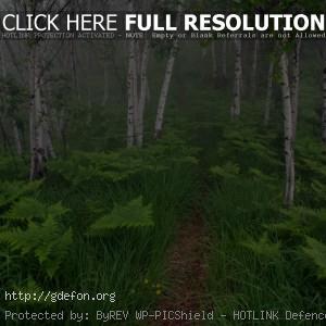 Деревья, лес, папоротники, кусты, тропа