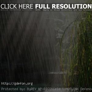 Дождь, трава, солнце