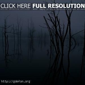 отражение, деревья, озеро