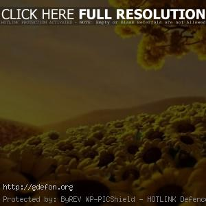Подсолнухи, поле, дерево, небо