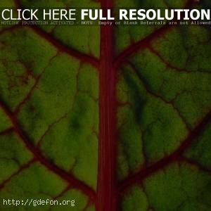 Лист, зелень, макро
