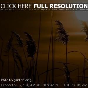 Закат, солнце, камыши