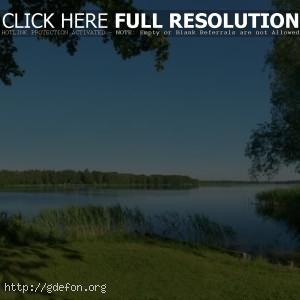 Лето, река, природа, деревья, трава, камыши