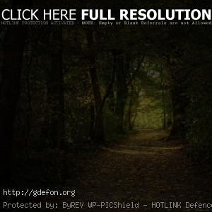 Лес, тропа, деревья, листья
