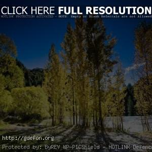 Деревья, свет, осень