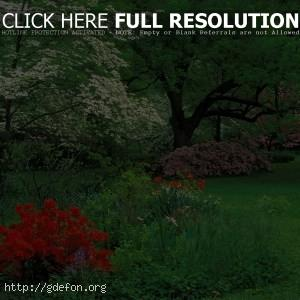 Азалии, парк, деревья