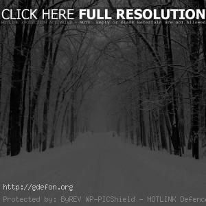 Снег, дорога, лес