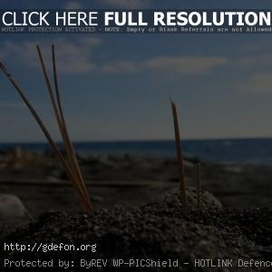 макро, берег, песок