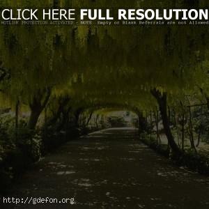 Природа, дорога, деревья