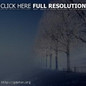 Зима, холод, деревья, дорога
