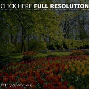 Деревья, цветы, тюльпаны