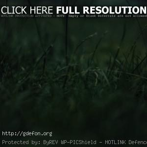 Макро, трава, зелень