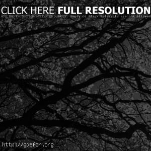 Черно-белое, ветки, дерево