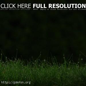 Трава, роса, капли, макро, зелень