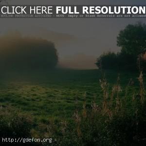 Утро, трава, деревья, дом