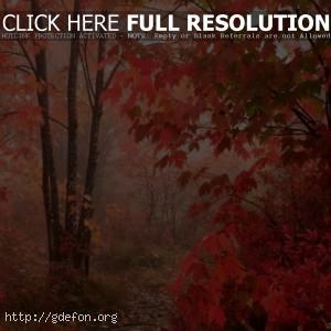 Осень, листья, лес