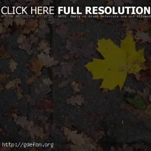 Желтые листья на асфальте