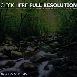 Река, лес, камни
