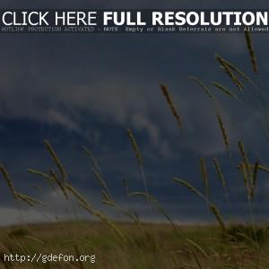 Небо, колоски, поле