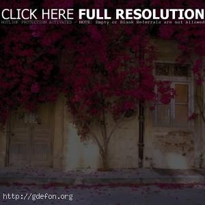 Цветущий дом