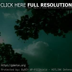 зелень, деревья, солнце