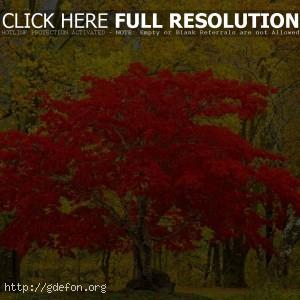 Лес, дерево, листья, природа