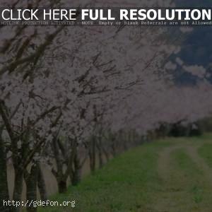 пейзаж, дорога, деревья, весна
