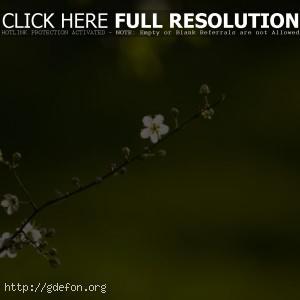 Весна, веточка, цветок