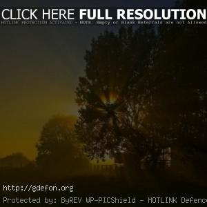 Ночь, солнце, восход, дерево