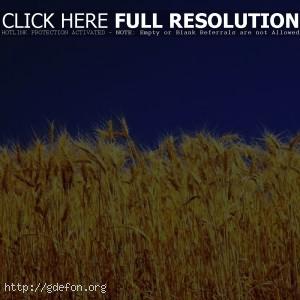 Желто поле и синее небо
