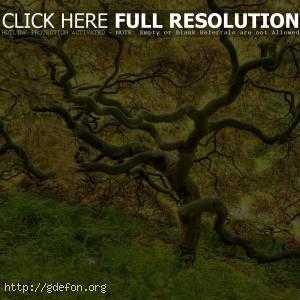 Красивое желтое дерево