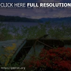 лодка, канал, цветы
