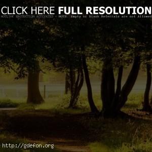Природа, деревья, парк