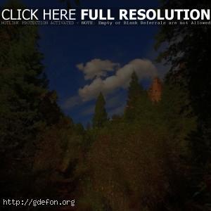 Деревья, облака, тропа, зеленый, лето