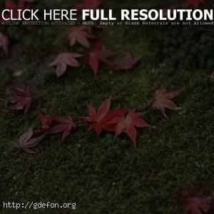 Япония, трава, листья