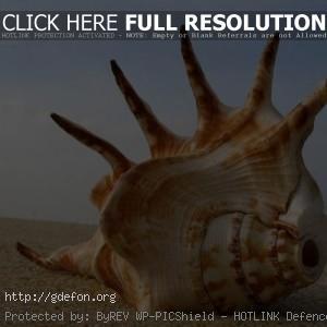 Огромная раковин на берегу