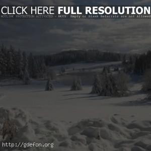 Зима, ели, озеро, лед