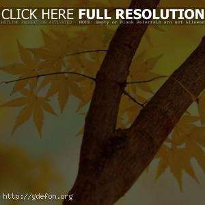 Осень, листья, ветка