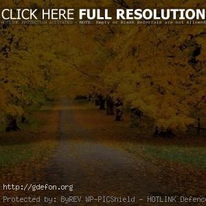 Осень, дорога, парк