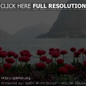 Весна, цветы, горы, вид, туман
