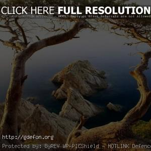 Деревья, море, скалы