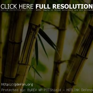 Фото бамбук
