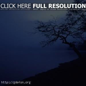 Дерево, берег, туман