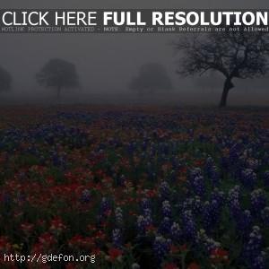 Цветочная поляна в тумане