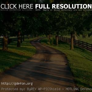 Дорога, деревья, лето