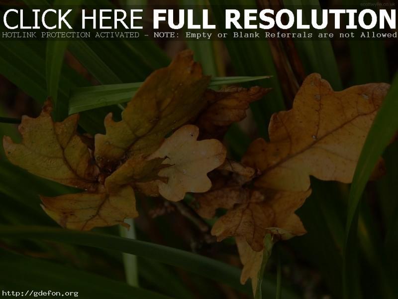 Обои Листья, осень, зеленый фото картики заставки